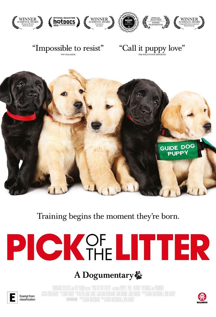 cinema Arts MR - Pick of the Litter
